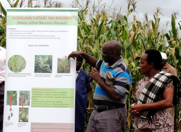 Dr. MacDonald Bright Jumbo from CIMMYT, Kenya, briefed the farmers on the MLND and its symptoms.