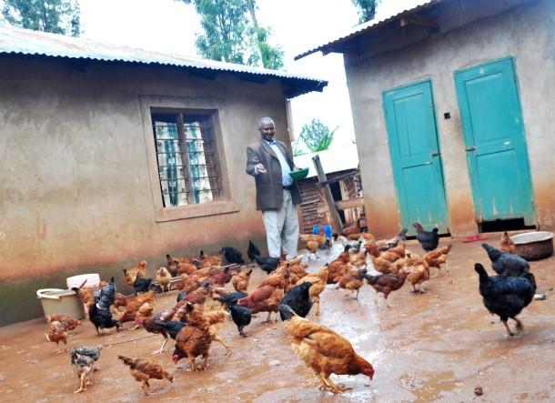 Mayi feeding his local chicken
