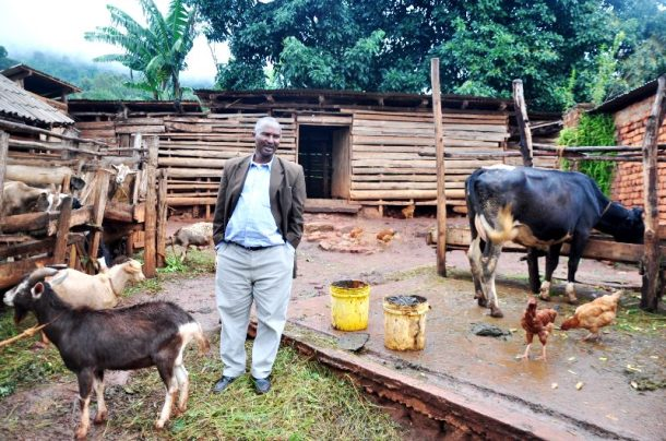 Mayi shows us his cows and milking goats